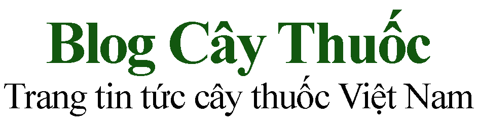 Blog Cây Thuốc – Trang tin tức cây thuốc Việt Nam